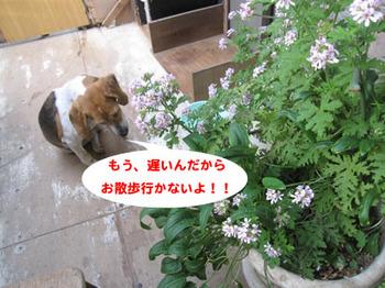 IMG_8715-01.jpg