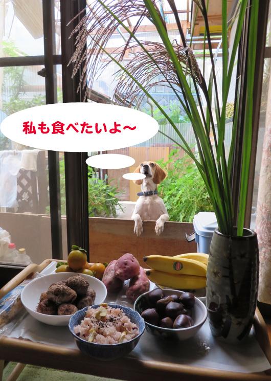 IMG_5268-01.jpg