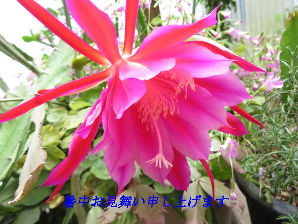 IMG_6359-01.jpg