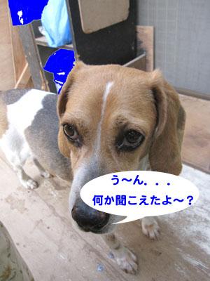 IMG_8709-01.jpg
